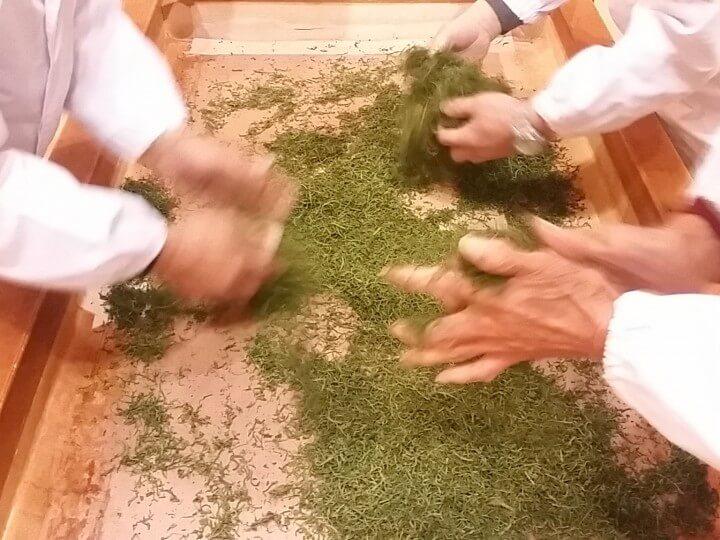 川根本町で行われた、川根茶初揉みの様子